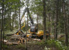 Tigercat lansează mult așteptatul harvester 1165 de dimensiuni medii